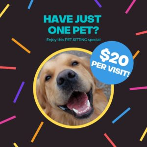 Athens Pet Sitter Special